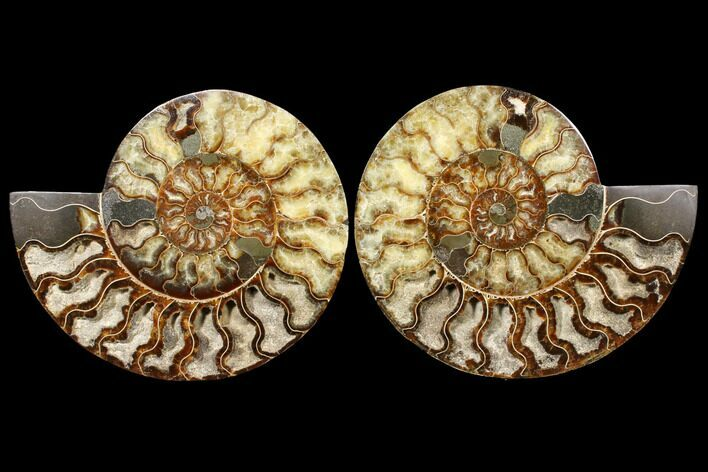 "10.75"" Agatized Ammonite Fossil (Pair) - Huge Example"