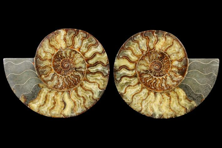 "10.25"" Agatized Ammonite Fossil (Pair) - Huge Example"