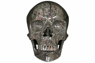 "Buy 8.8"" Polished Skull of Crinoidal Limestone - #127579"