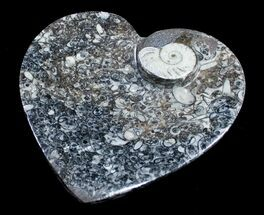 Heart Shaped Fossil Goniatite Dish For Sale, #8885