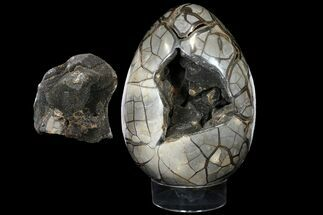 "Giant, 15"" Polished Septarian Puzzle Geode (58 lbs) - Black Crystals For Sale, #127154"