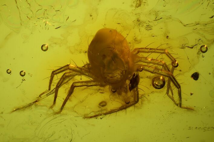 Detailed, Large Fossil Mite (Acari) In Baltic Amber