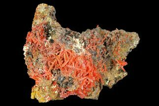 Crocoite - Fossils For Sale - #127944