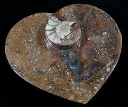 "6.5"" Heart Shaped Fossil Goniatite Dish For Sale, #8999"