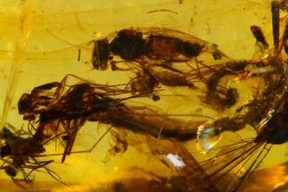Buy Cretaceous Insect Cluster (Dragonfly & Flies) in Amber - Myanmar - #128854