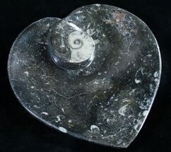 "6.5"" Heart Shaped Fossil Goniatite Dish For Sale, #9011"