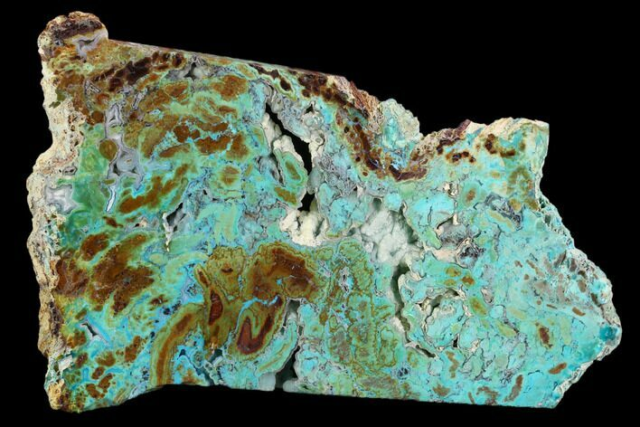 "6.6"" Petrified ""Colla Wood"" With Chrysocolla & Malachite - Turkey"