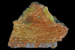 "4.7"" Thick, Polished Petrified Wood Section - Arizona For Sale, #129455"