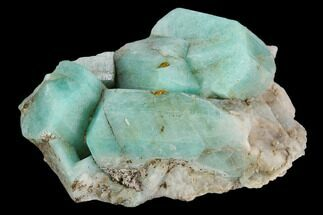 "Buy 2.2"" Amazonite Crystal Cluster - Colorado - #129658"