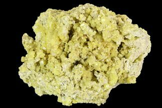 "Buy 3.3"" Sulfur Crystal Cluster on Matrix - Nevada - #129748"