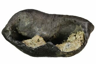 Whale (Unknown Species) - Fossils For Sale - #130236