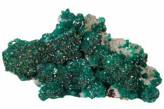 "Buy 2.4"" Gemmy Dioptase Cluster on Dolomite - Ntola Mine, Congo - #130495"