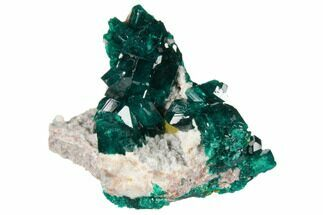 "1.4"" Gemmy Dioptase Cluster on Dolomite - Ntola Mine, Congo For Sale, #130496"