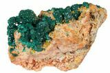 "3.1"" Gemmy Dioptase and Mimetite on Dolomite - Ntola Mine, Congo - #130500-3"