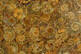 "8"" Composite Plate Of Agatized Ammonite Fossils - #130569-1"