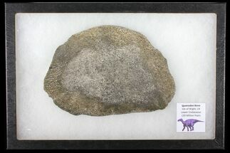Iguanodon - Fossils For Sale - #131211
