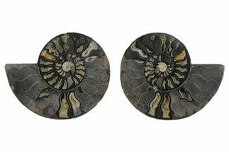 6.1 Split Black/Orange Ammonite Pair - Unusual Coloration For Sale, #132245