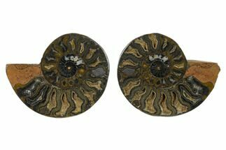 "Buy 3.95"" Cut/Polished Ammonite Fossil (Pair) - Unusual Black Color - #132559"