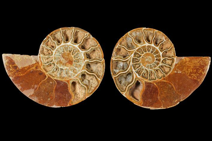 "5.2"" Cut & Polished Agatized Ammonite Fossil (Pair)- Jurassic"