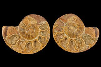 "Buy 3.4"" Cut & Polished Agatized Ammonite Fossil (Pair)- Jurassic - #131701"