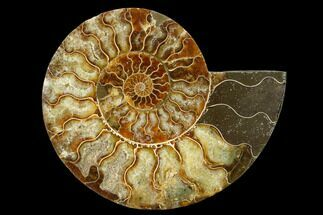 "5.9"" Agatized Ammonite Fossil (Half) - Madagascar For Sale, #135248"