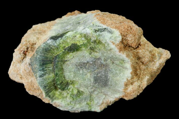 "1.4"" Radiating, Green Wavellite Crystal Aggregation - Arkansas"