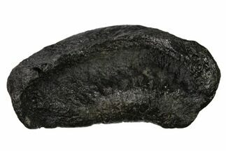 "Buy 3.7"" Fossil Whale Ear Bone - Miocene - #136903"