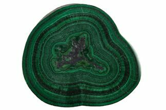 "Buy 1.2"" Polished Malachite Stalactite Slice - Congo - #137044"