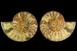 "6.5"" Agatized Ammonite Fossil (Pair) - Madagascar For Sale, #135272"