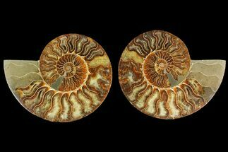 "6.3"" Agatized Ammonite Fossil (Pair) - Madagascar For Sale, #135281"