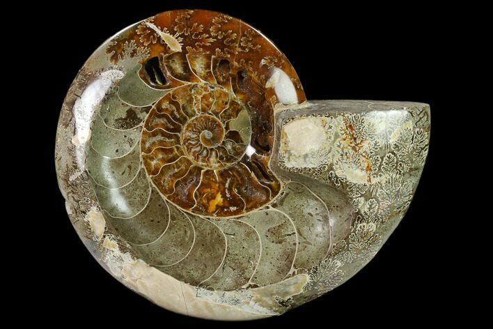 "6.8"" Wide Polished Fossil Ammonite ""Dish"" - Inlaid Ammonite"