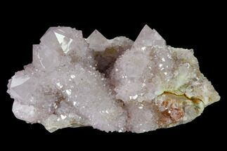 "3.4"" Cactus Quartz (Amethyst) Crystal Cluster - South Africa For Sale, #137810"