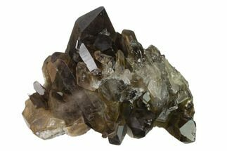 "Buy 3.2"" Dark Smoky Quartz Crystal Cluster - Brazil - #137824"