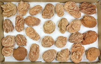 "Buy Wholesale Lot: 2-3"" Desert Rose From Morocco - 27 Pieces - #138121"