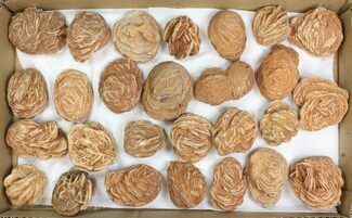 "Wholesale Lot: 2-3"" Desert Rose From Morocco - 27 Pieces For Sale, #138122"