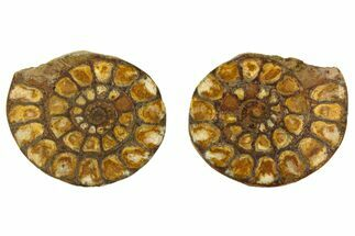 "Buy 1.9"" Iron Replaced Ammonite Fossil Pair - Morocco - #138031"