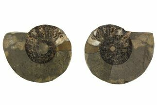 "2.1"" Iron Replaced Ammonite Fossil Pair - Morocco For Sale, #138041"