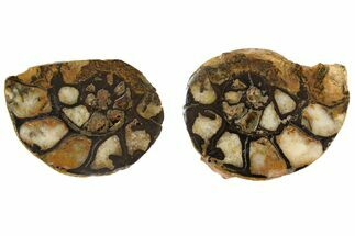 "Buy 1.8"" Iron Replaced Ammonite Fossil Pair - Morocco - #138043"