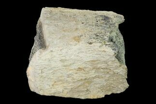 "Buy 4.5"" Fossil Triceratops Bone Section - North Dakota - #138322"