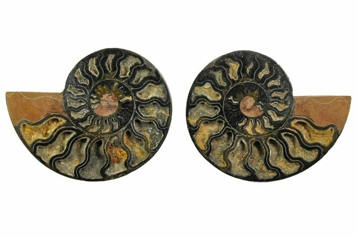 "4.6"" Cut/Polished Ammonite Fossil (Pair) - Unusual Black Color"