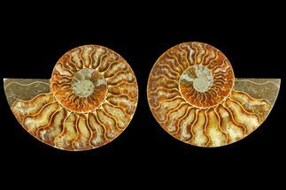"4.1"" Agatized Ammonite Fossil (Pair) - Madagascar For Sale, #139736"