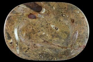 Arionoceratid Nautiloid - Fossils For Sale - #140229