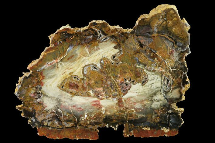 "9.6"" Colorful, Hubbard Basin Petrified Wood Slab"