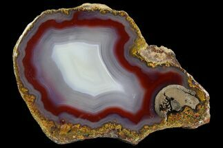"Buy 4.1"" Polished Laguna Agate Slab - Mexico - #141346"