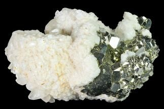 Pyrite & Calcite - Fossils For Sale - #141819