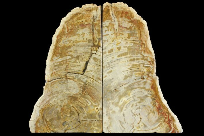 "8.7"" Tall, Petrified Wood (Tropical Hardwood) Bookends - Indonesia"