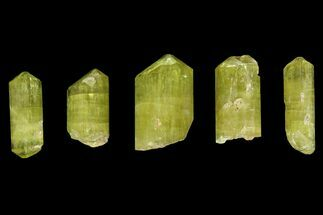 "Five Yellow Apatite Crystals (over 1"") - Morocco For Sale, #143084"