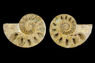 "Buy 3.2"" Cut & Polished Agatized Ammonite Fossil (Pair)- Jurassic - #131668"