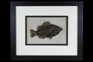 "Buy 5"" Framed Fossil Fish (Cockerellites) - Wyoming - #144127"