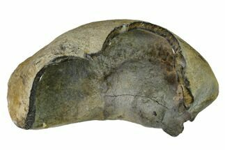 Whale (Unknown Species) - Fossils For Sale - #144903